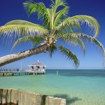 Caribbean, Honduras, Roatan Island, West End Beach, Palm tree on a beach